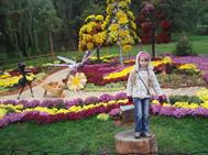 Выставка хризантем, 14.10.2012
