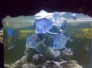 Океанариум, 23.12.2012
