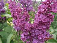 Ботанический сад, 17.05.15
